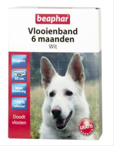 ALL IN PAKKER VLOOIENBAND HOND WIT